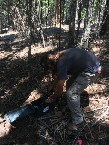 Instalando uno de los detectores en el bosque