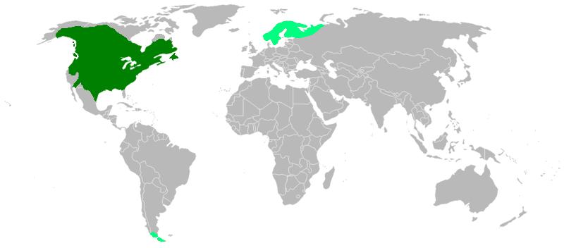 American_beaver_map
